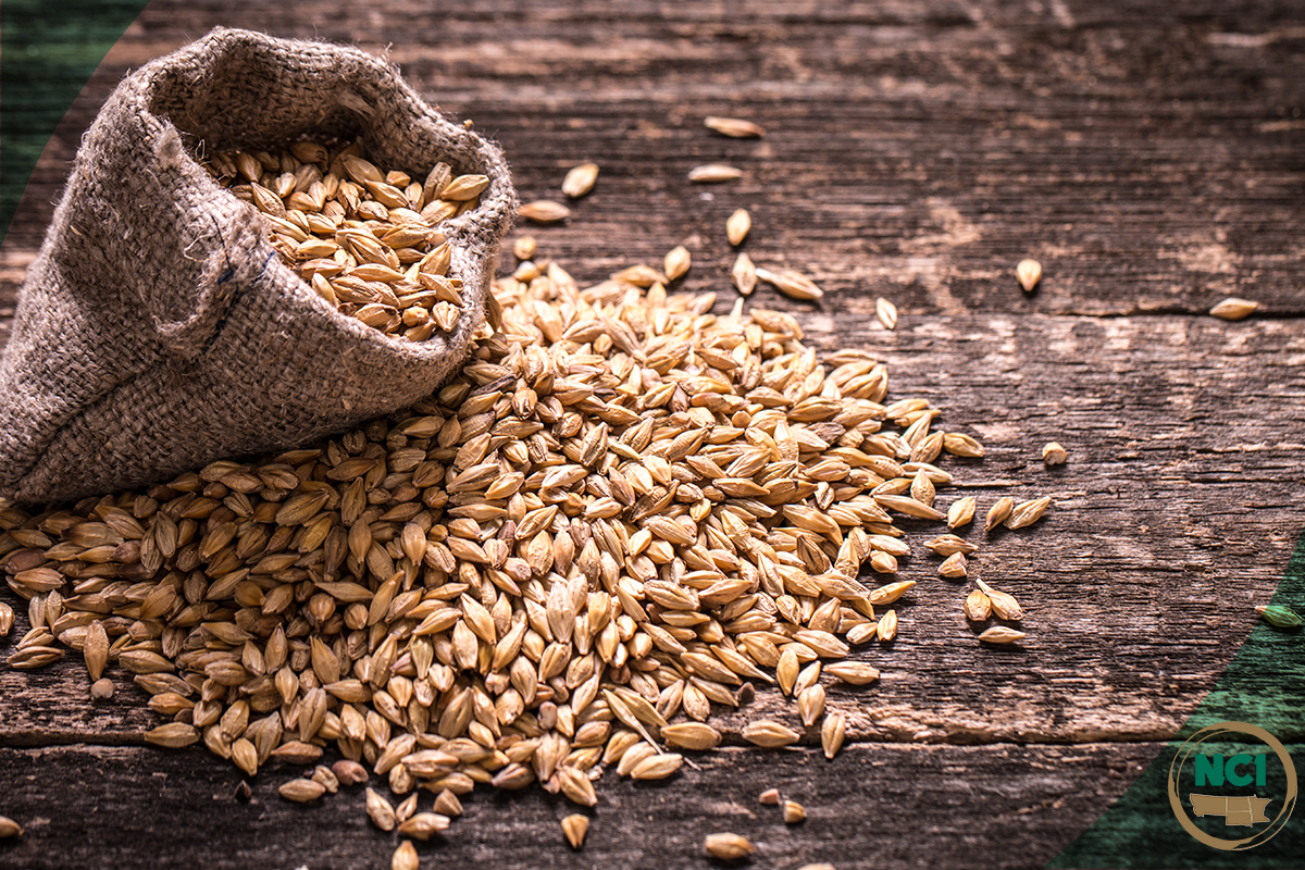 Barley & Malt Quality Short Course Blog Image.jpg