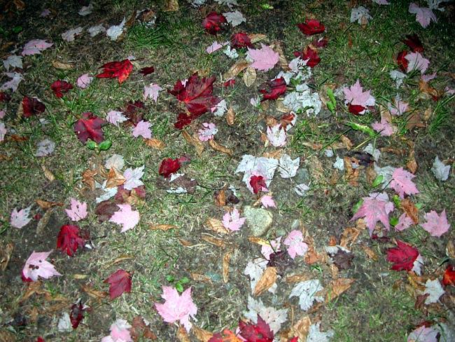 Adirondack Park, NY, September 14, 2004