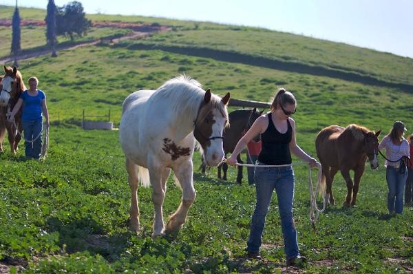 HorseGreenHillsStudentsWalk_4617web.jpg