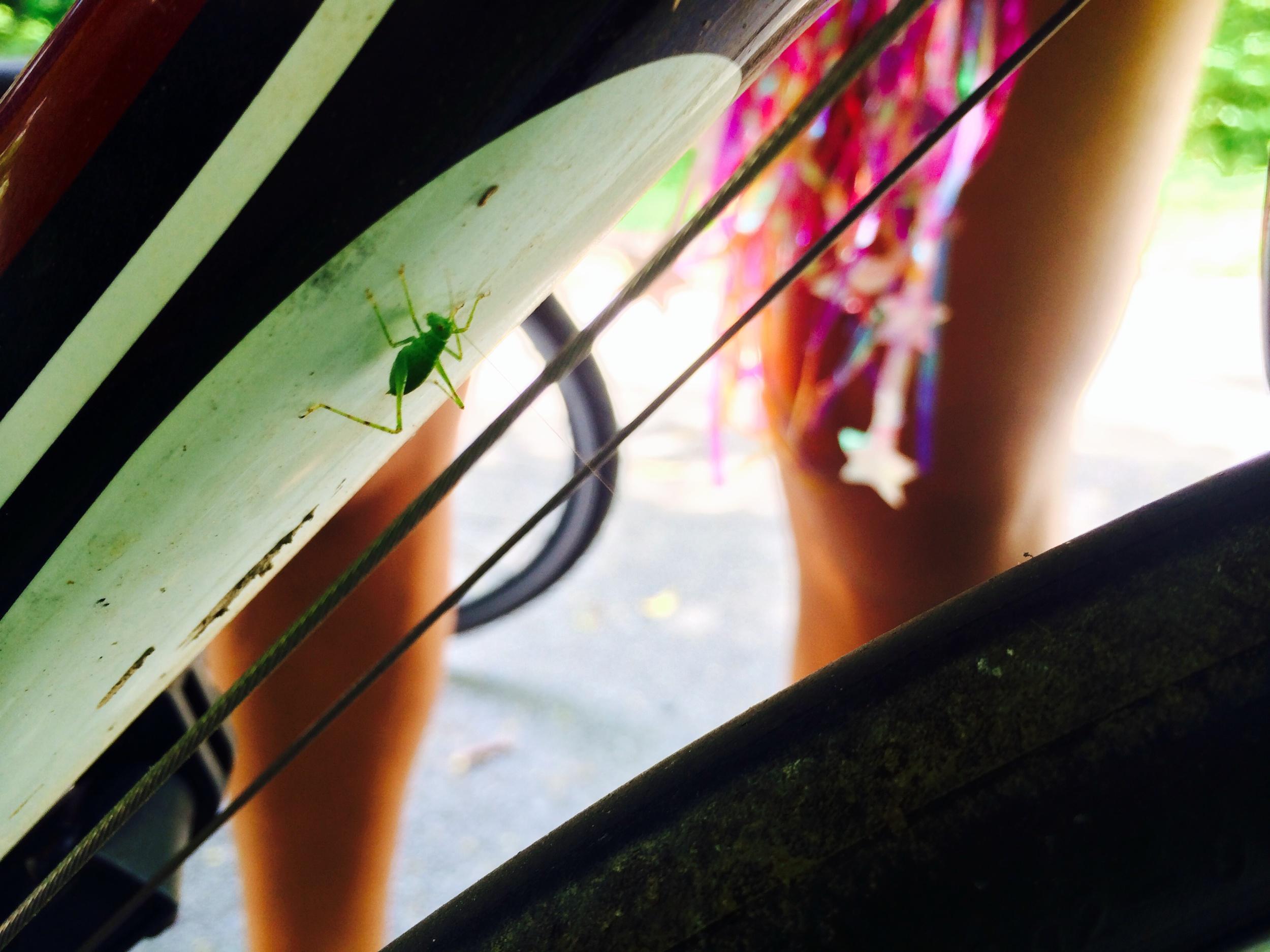A grasshopper jumped onto my bike!