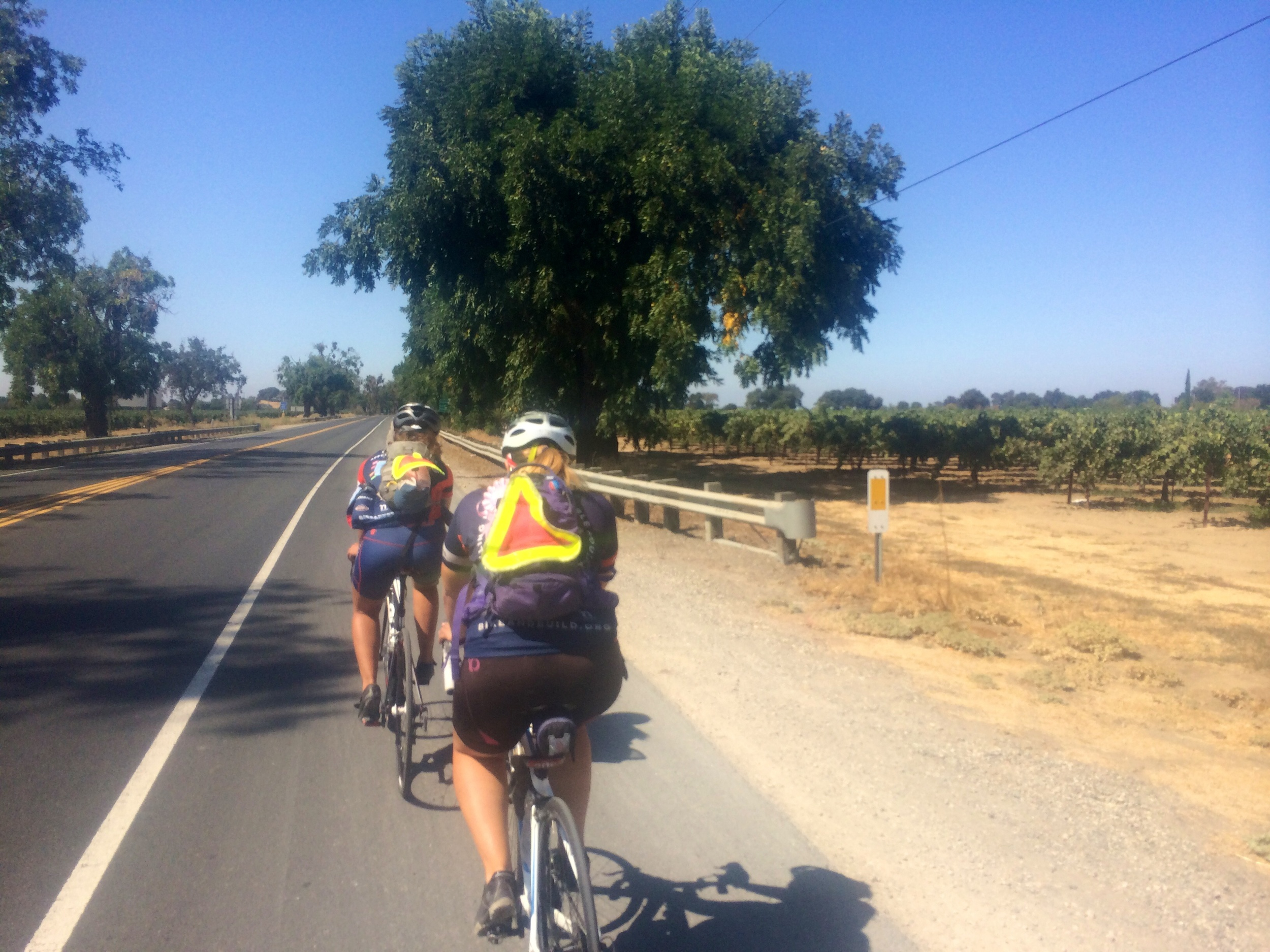 Riding through California to Stockton - reminded me so much of Sonoma County!