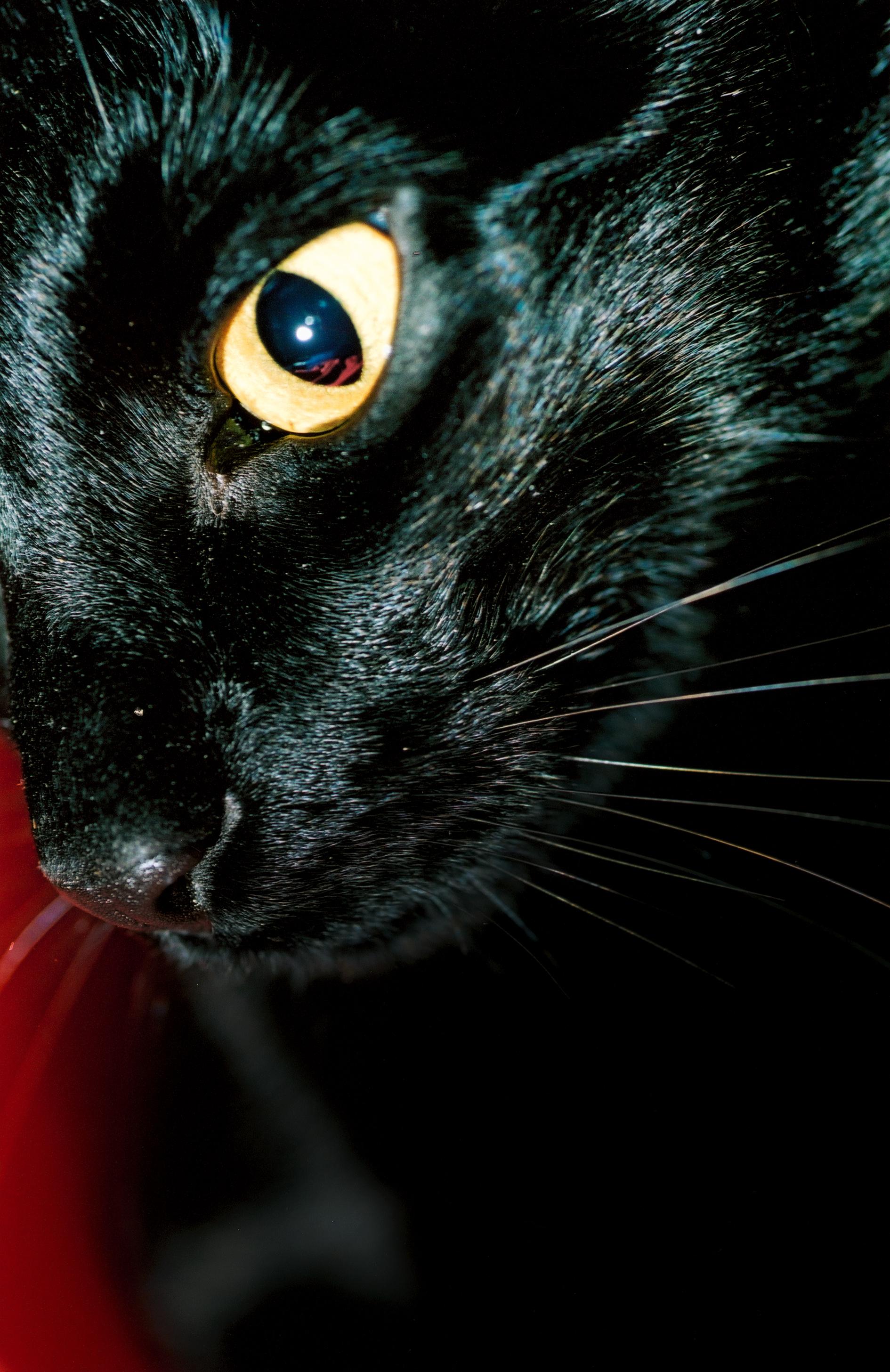 Mrs Sizzle cat.jpg