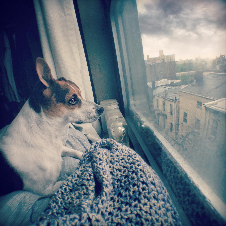 Mrs Sizzle Shotzy dog.jpg