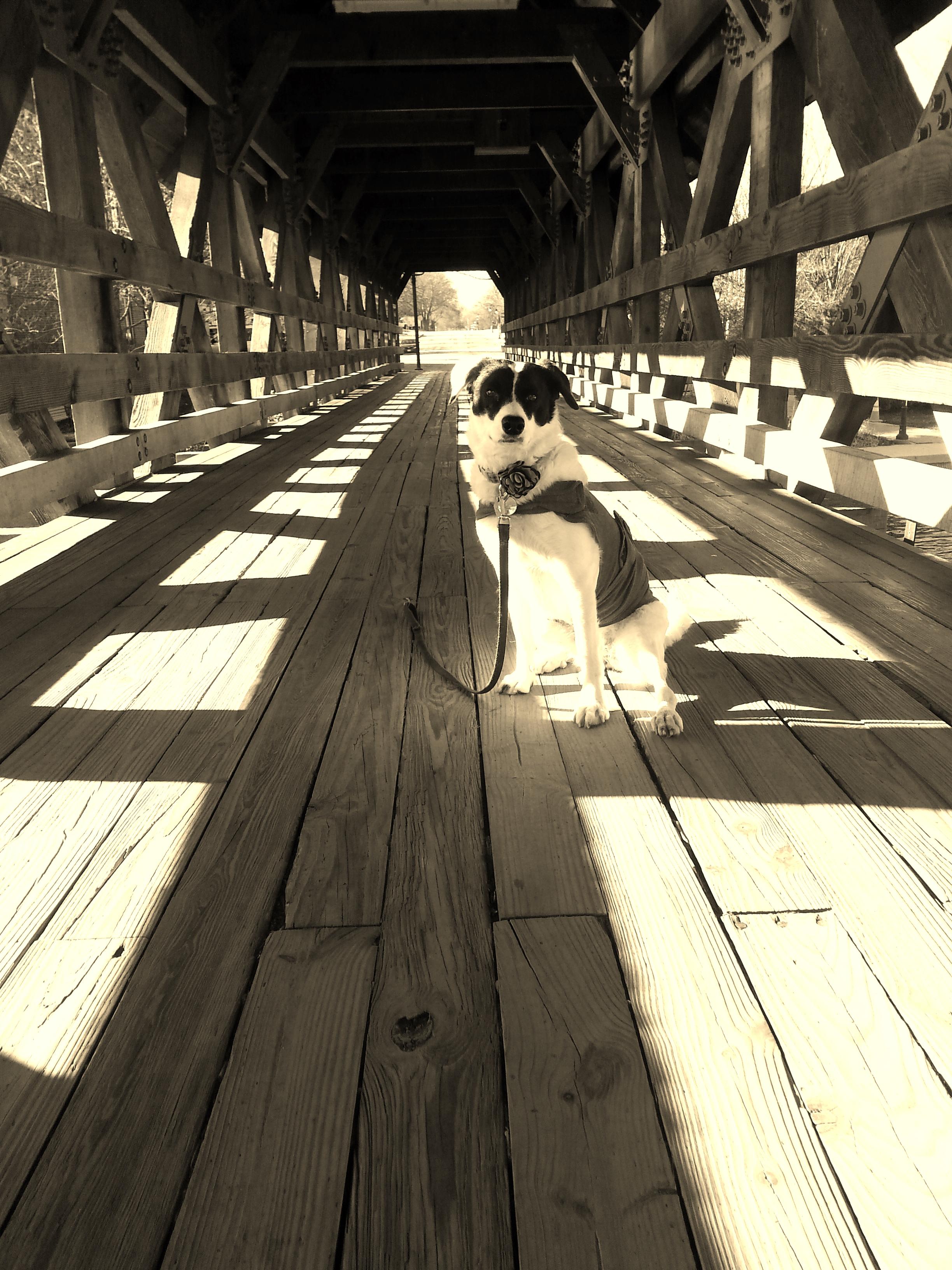 Mrs Sizzle Rescue Dog.jpg