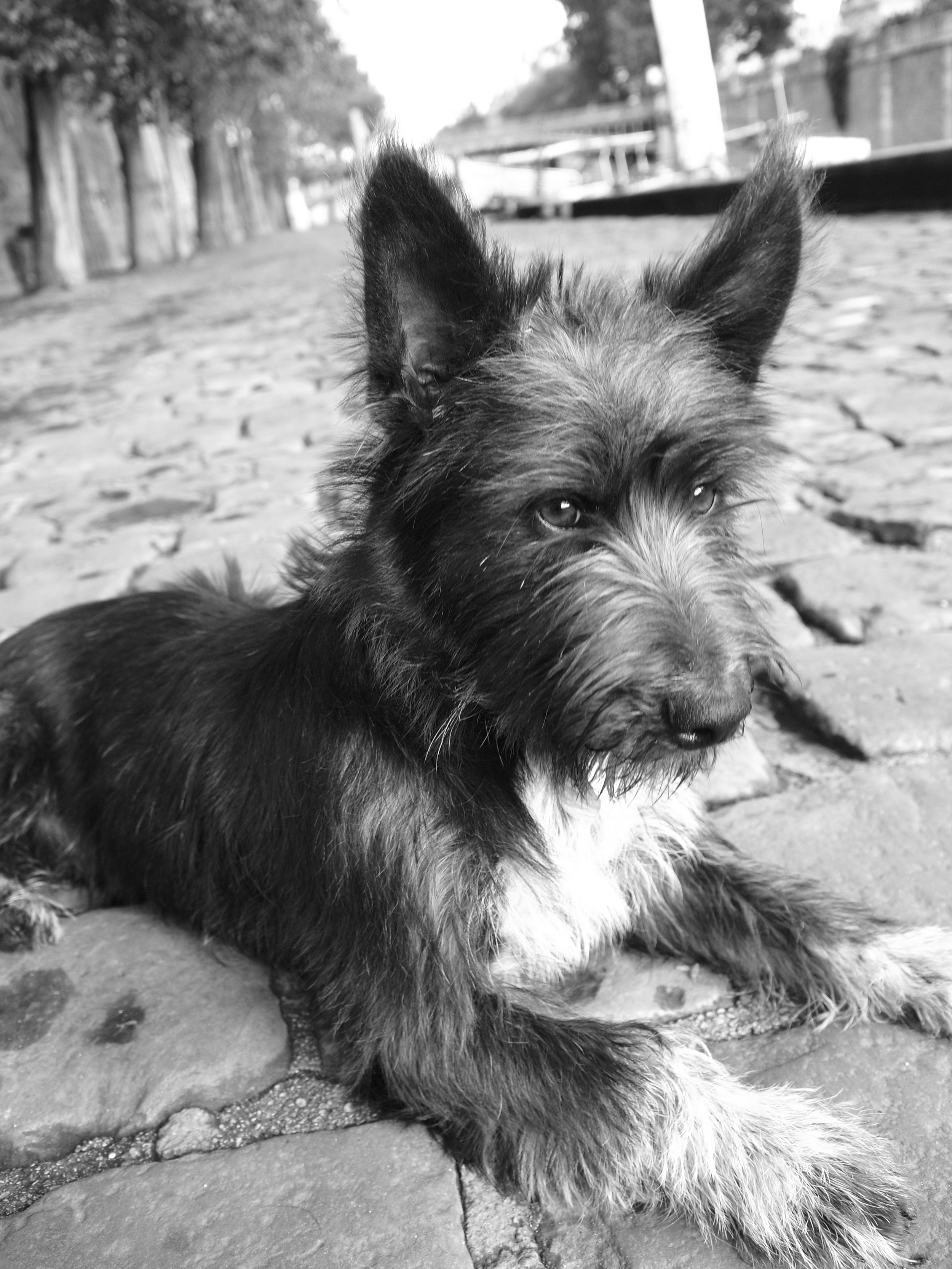 Mrs Sizzle Delhomme dog.jpg
