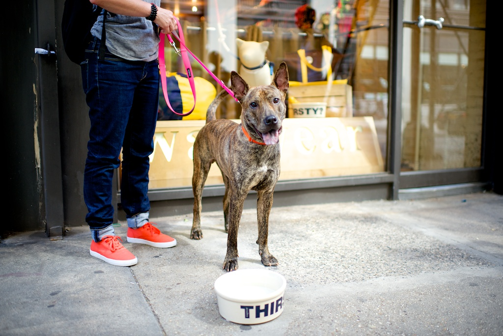 photo of  Payton by  THE DOGIST on set training by  Who's Walking Who .