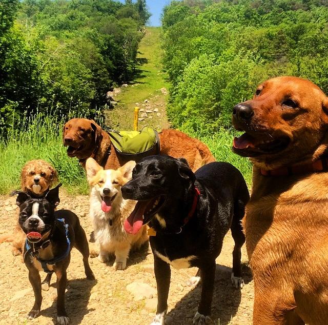 Mrs Sizzle Dog Hike.jpg