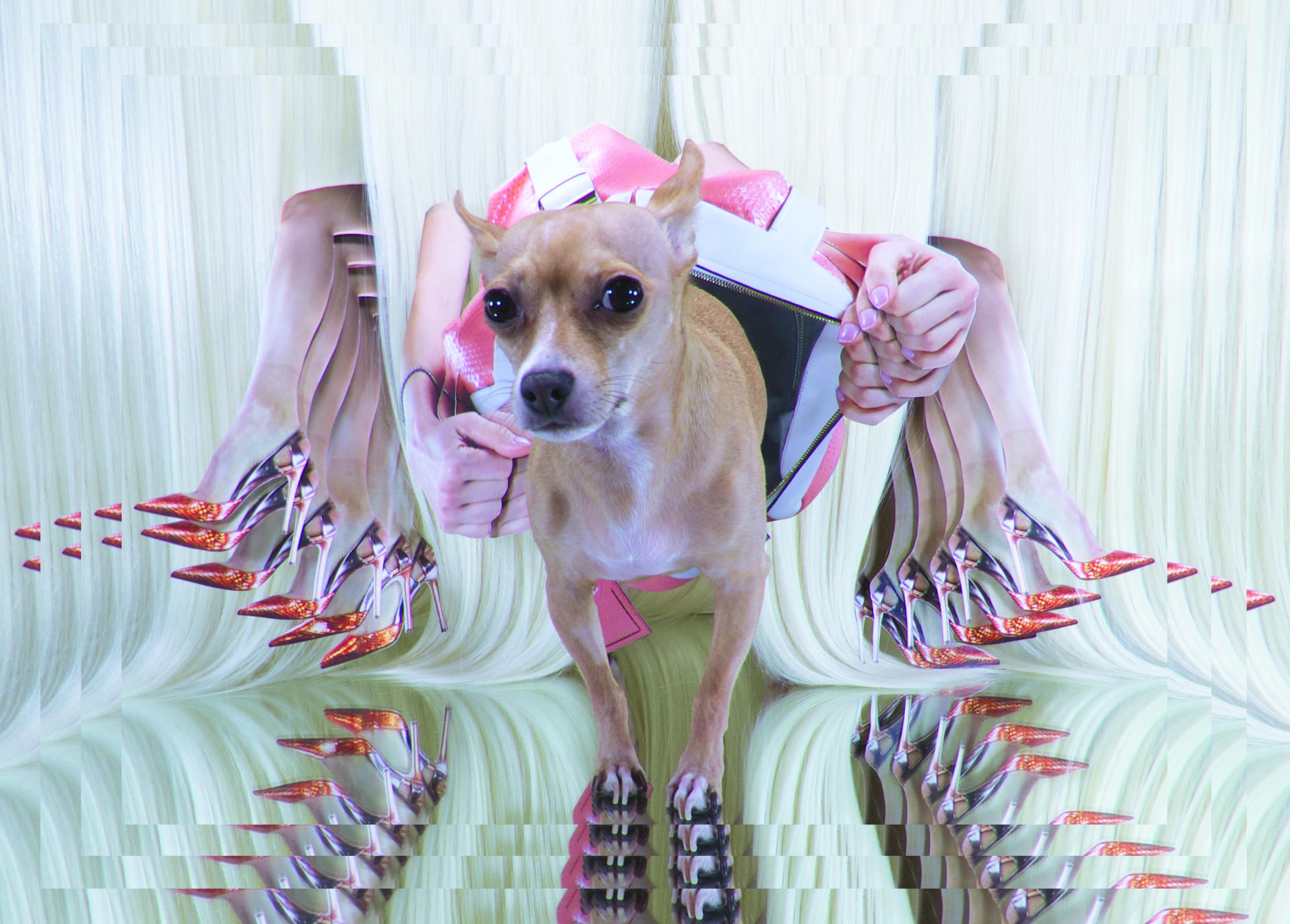 Mrs Sizzle Dog Collage.jpg
