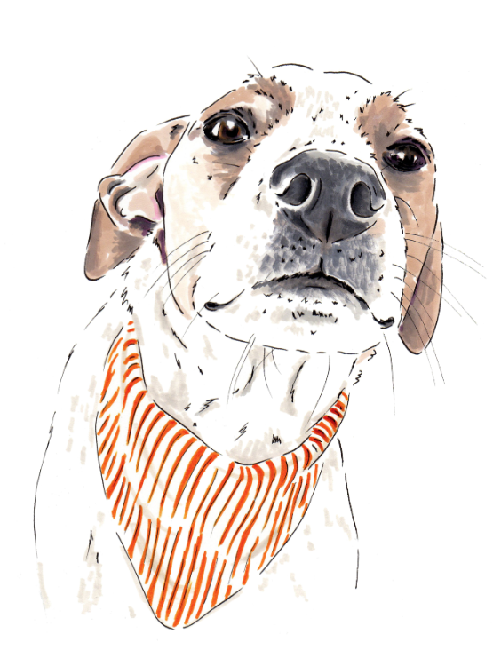 Mrs Sizzle Dog Illustrations.jpg