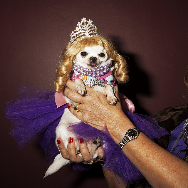 Mrs Sizzle Pagent Dog.jpg