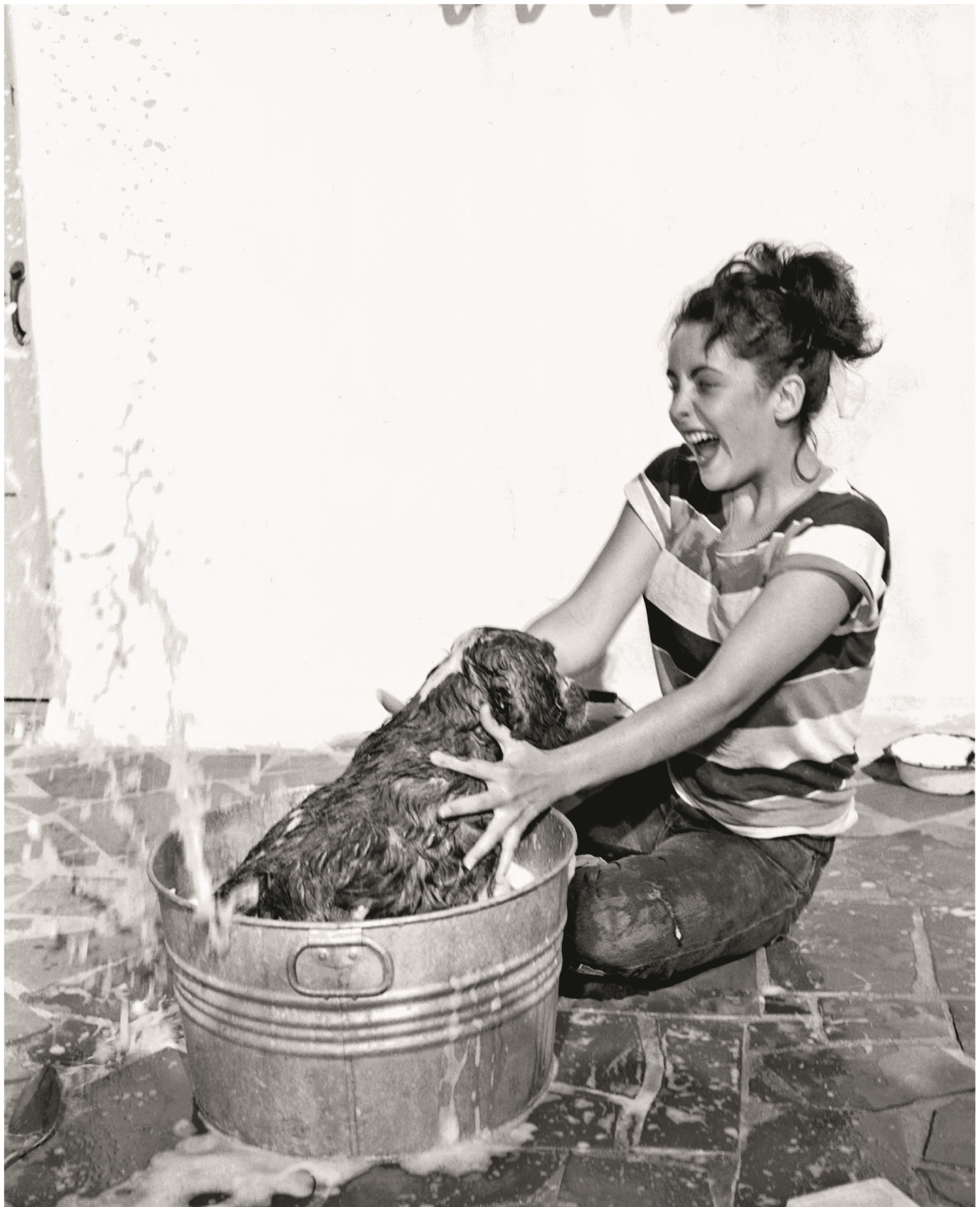 Elizabeth Taylor, MGM, 1950 Throughout her life Elizabeth Taylor was devoted to her dogs, and is seen here attempting to bathe her Cocker Spaniel, Amy.