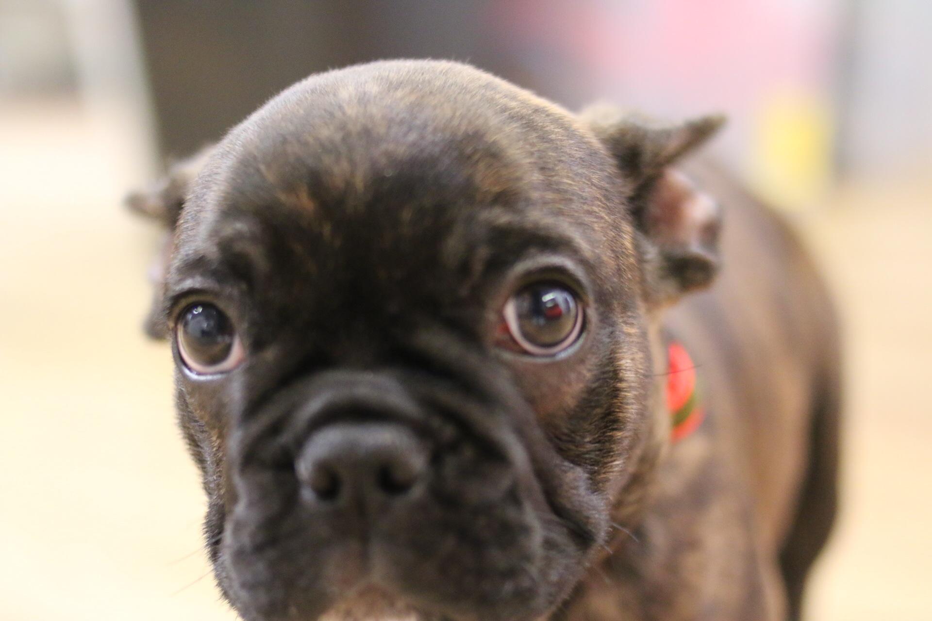Mrs Sizzle Dog House Training.jpg