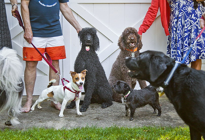 Mrs Sizzle Dog Pool Party.jpg
