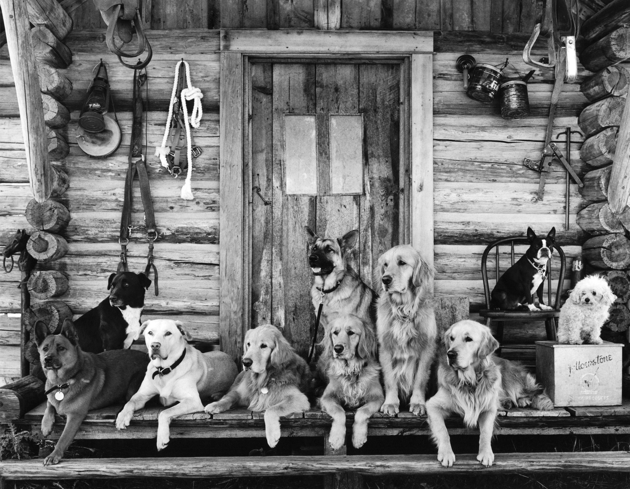 Mrs Sizzle Weber Dogs.jpg