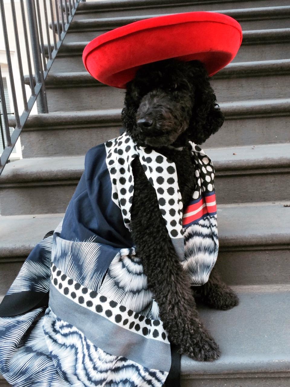 Zero Maria Cornejo dress, Maya Hanson hat