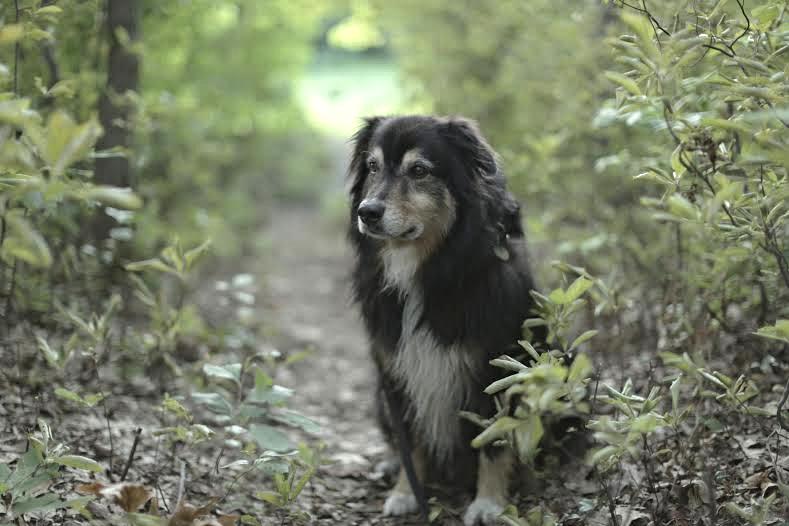 Milo in woods