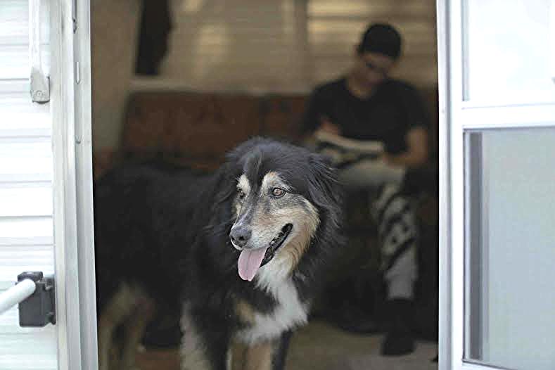 Milo guarding the trailer