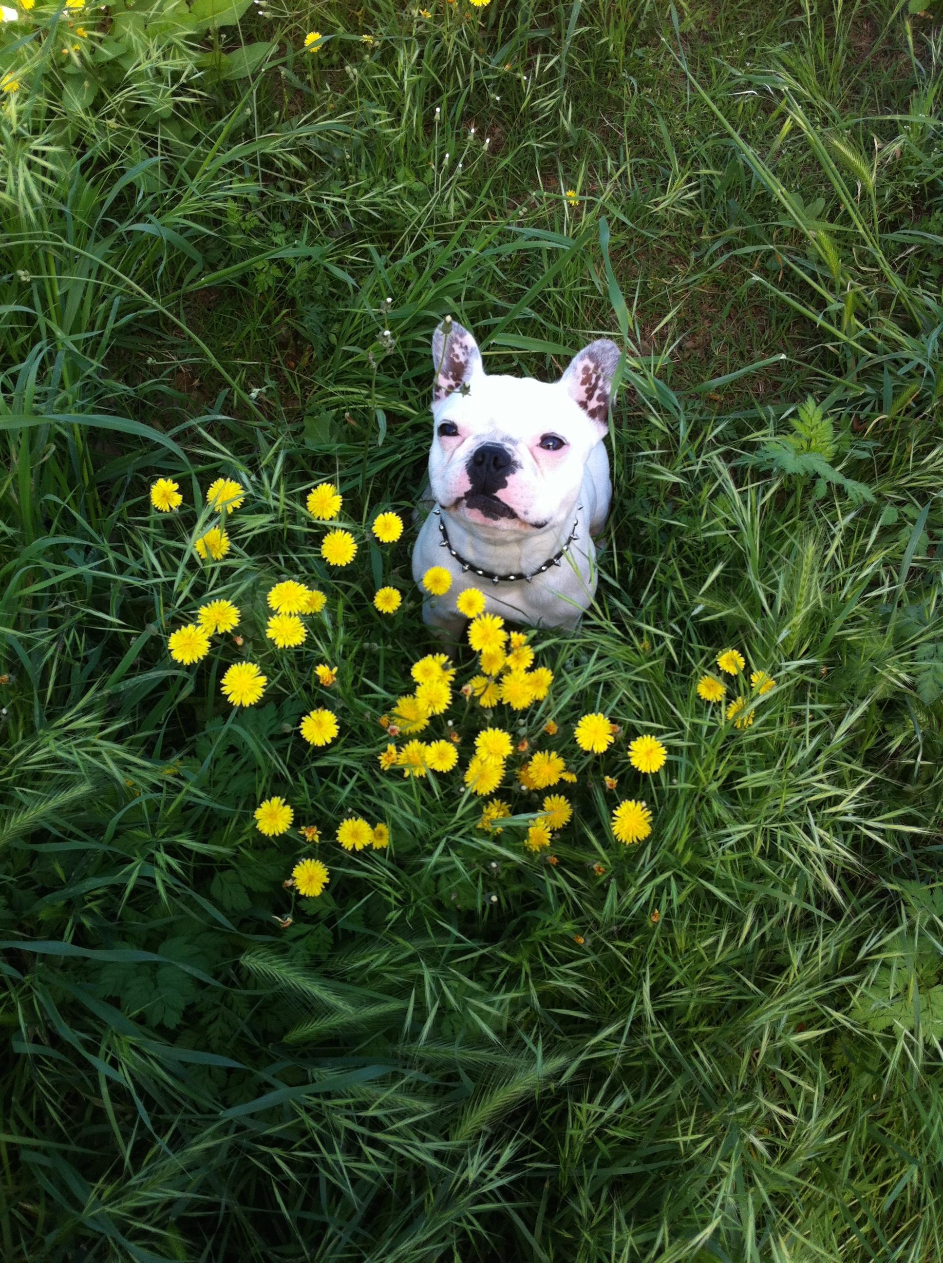 Perri in the grass