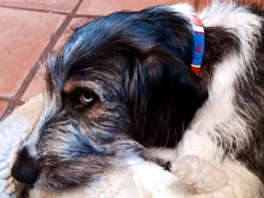 collar,   The Dog Collar Boutique