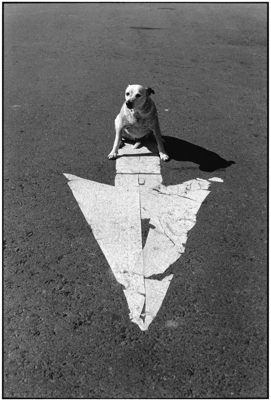 Arizona, 1998 Elliott's son's dog sitting on the road.