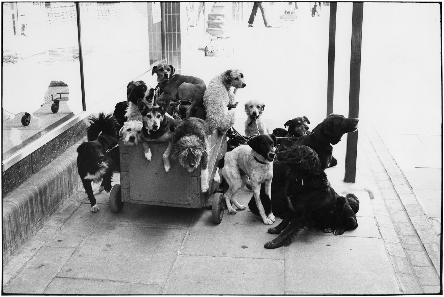 England, 1974 Elliott said the crazy old lady with all these dogs yelled at him for taking this.
