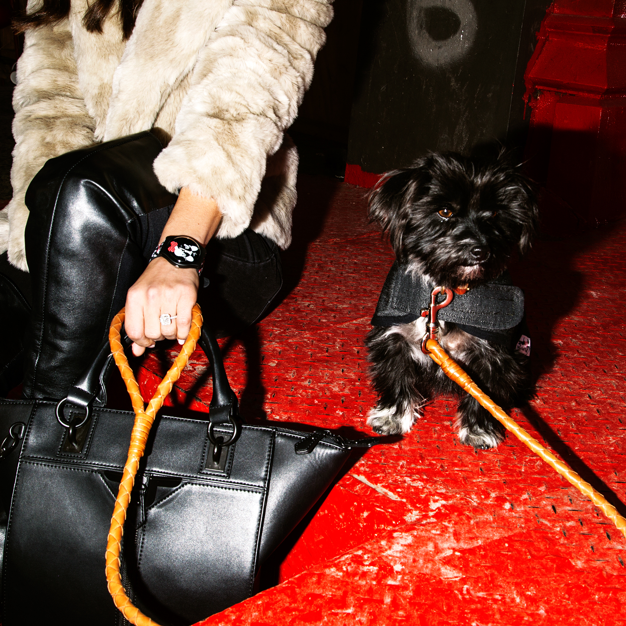 Leash,   Bottega Veneta  . Coat on Edie,   Mr. Soft Top  . Watch,   My Pet and Me Swatch