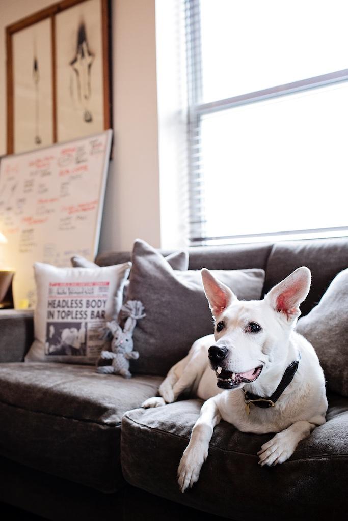Milou in Nadine's office
