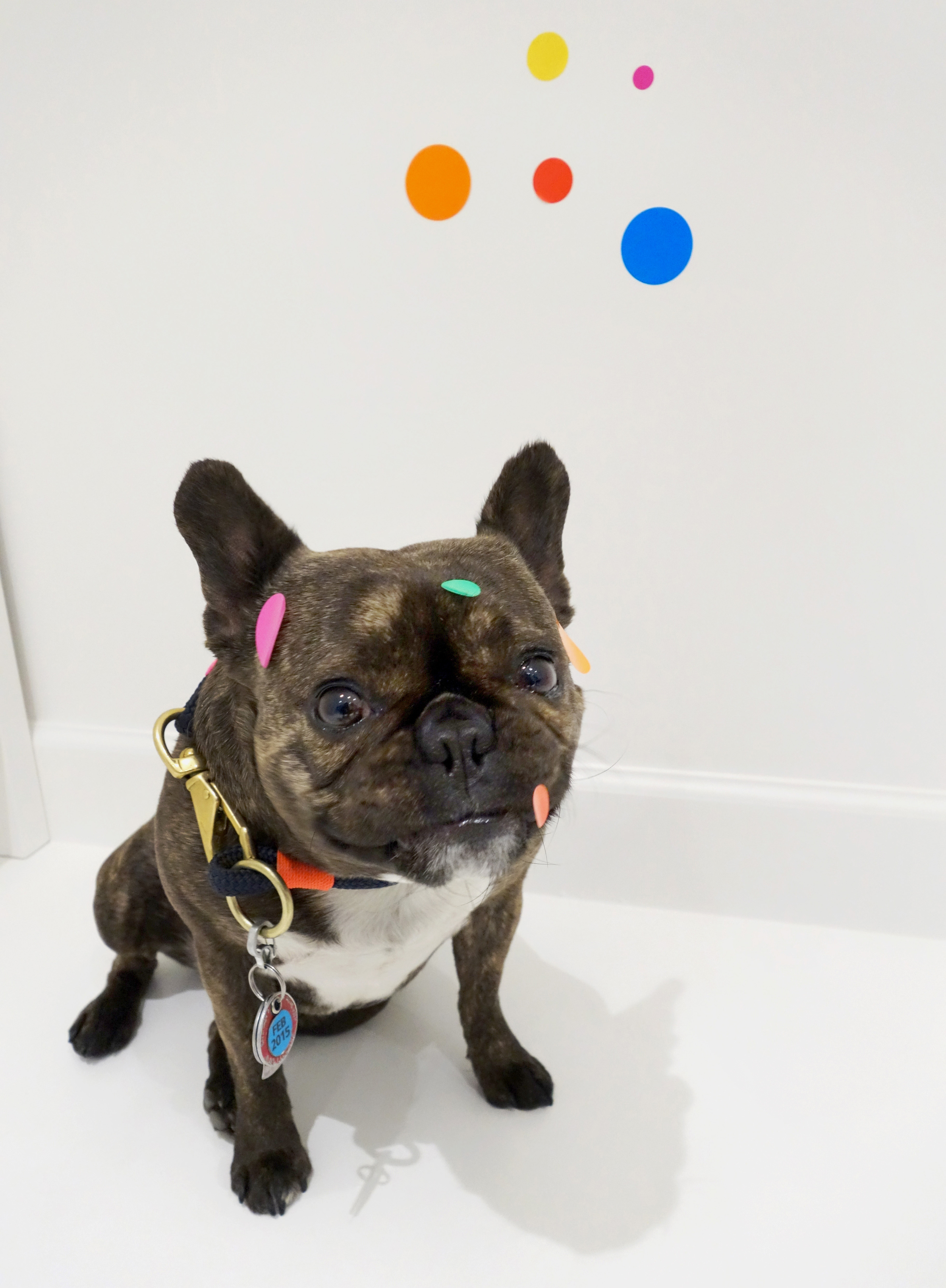"""I got stickers in my mouth!  Yayoi Kusama """"The obliteration room,"""" 2002-Present in Give Me Love at David Zwirner."""