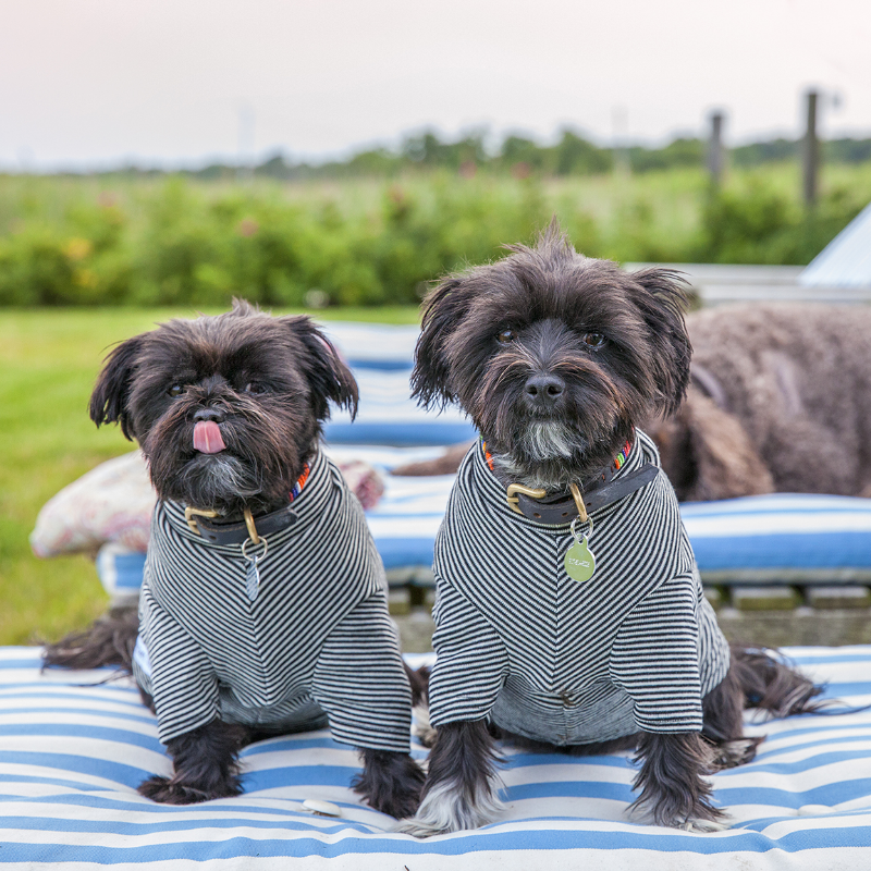 The Sizzle sister in their matching Mr. Soft Top shirts and their Kenyan Collection collars.