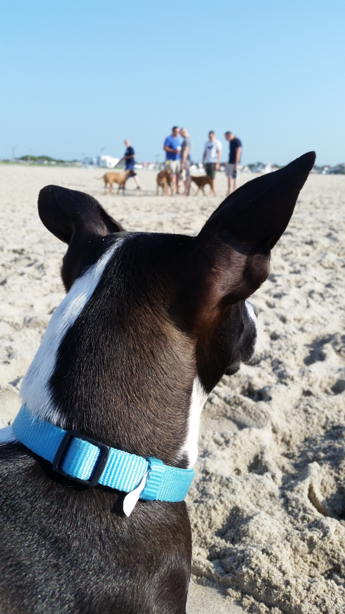 Stella at the beach now.