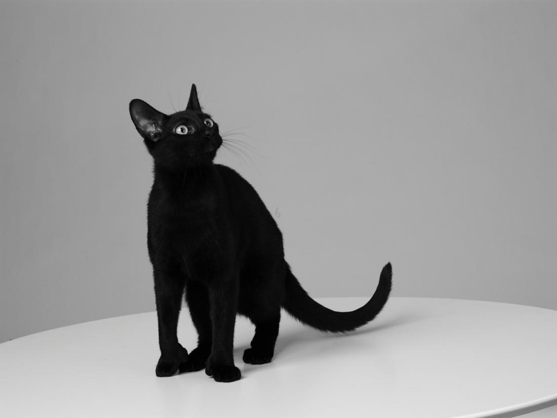 Mrs Sizzle Cat Lacombe.jpg