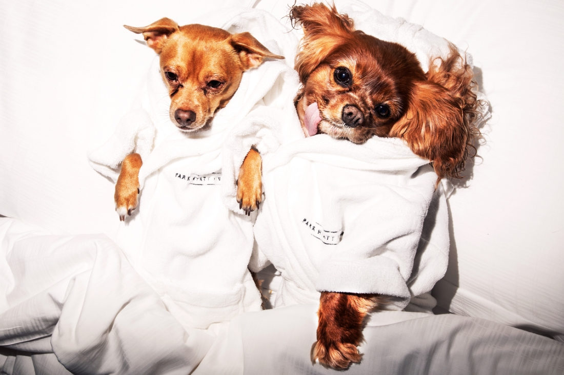 Finn and Toast all ready to pamper and room service