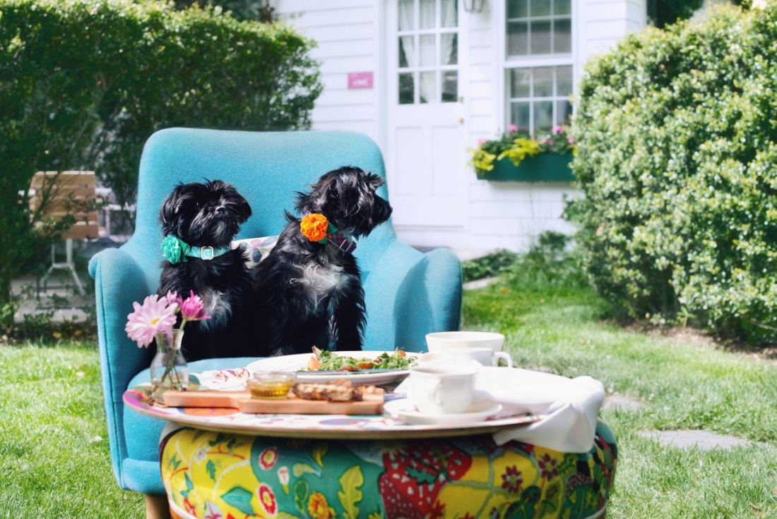 Edie and Clair enjoy a lunch and some in the garden