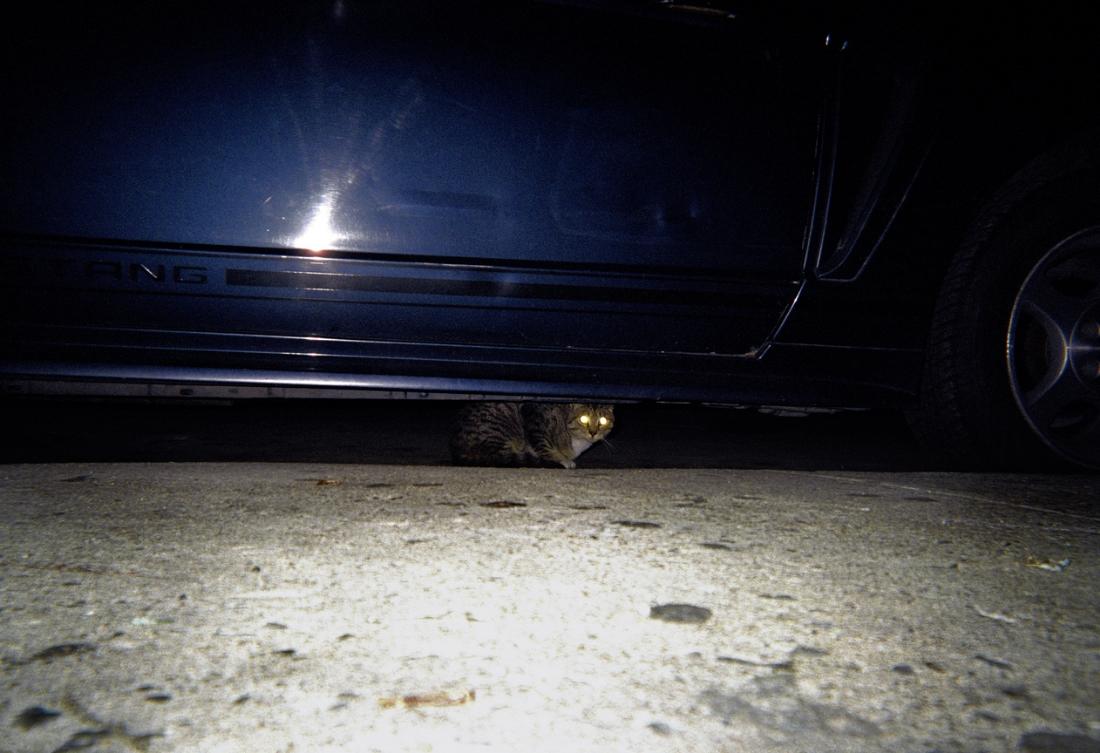 Mrs Sizzle Tim Barber cat.jpg