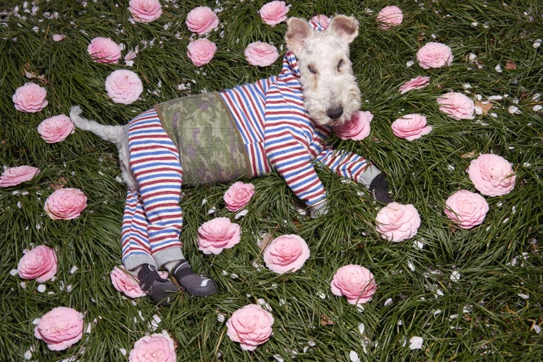 The famous instagram dog @Borotan