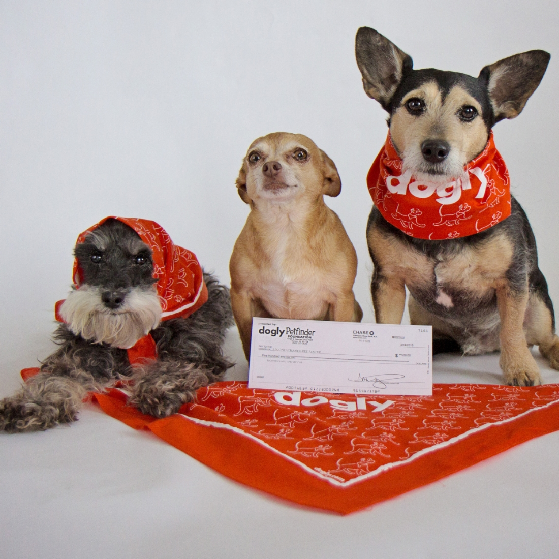 Check out the amazing new rescue app  DOGLY   -where dogs help dogs and make their humans heroes. Gracie, Mini, and Davey delivering the $500 Dogly Do Good grant PawsofOz earned for their creativity on Dogly to Holly's hometown shelter Second Chance Pet Rescue of Grand Lake. Four times a month,  creators  are recognized for their exceptional photos on Dogly with grants in their names to their chosen shelters. Dogly is a free download on iOS and Android. More information:  Dogly.com  . @beingdogly on Instagram.