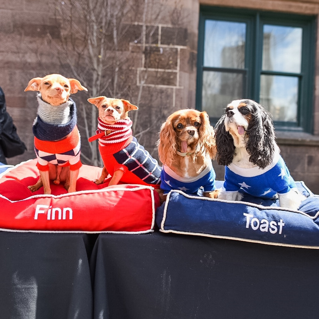 From left to right:   Tuna Melts my Heart   ,      Friends of Finn  ,   Toast Meets World and    Muppets Revenge  Photo by    THE DOGIST