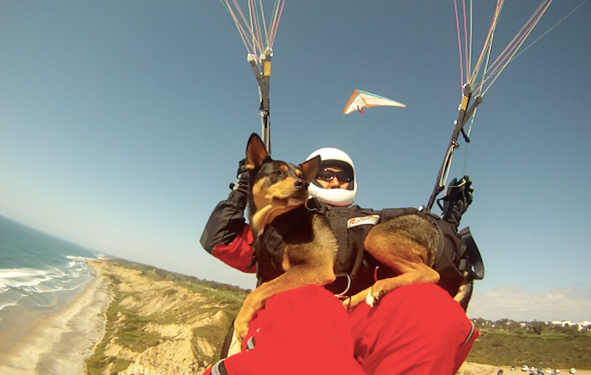 OK, not only does this dog surf but hang gliding is part of her vocabulary also!