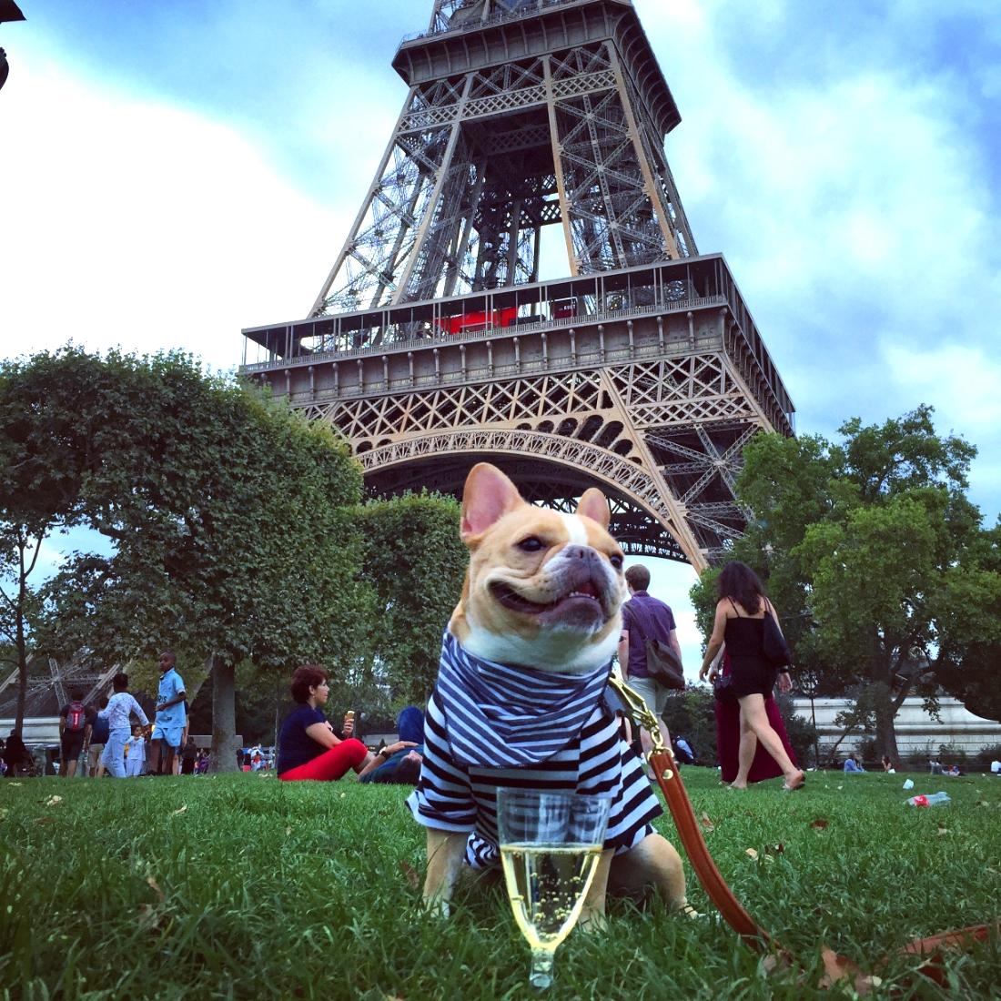 Scarf:  Donni Charm    Shirt:  Iconic Pet