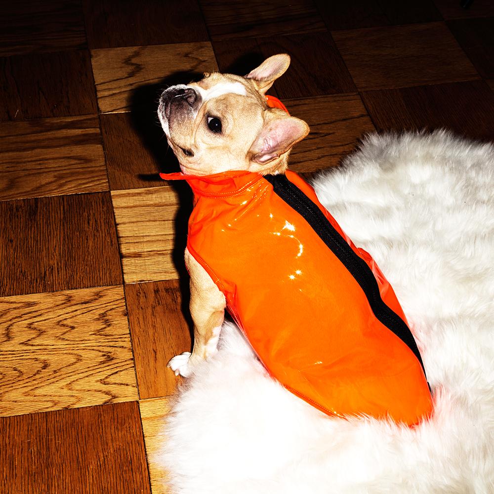 Raincoat:  Ware of the Dog