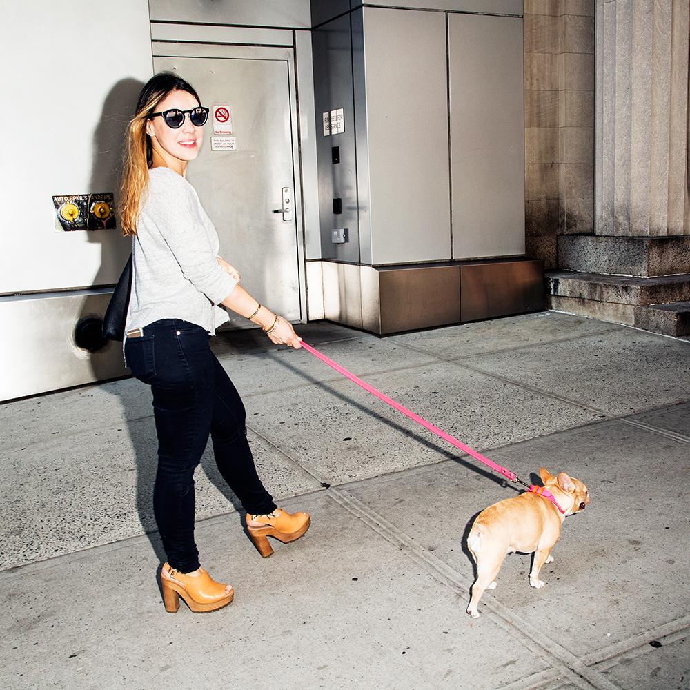 Collar/leash:  Ware of the Dog