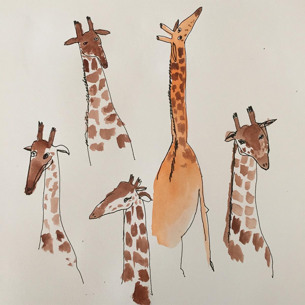 Posie of giraffes