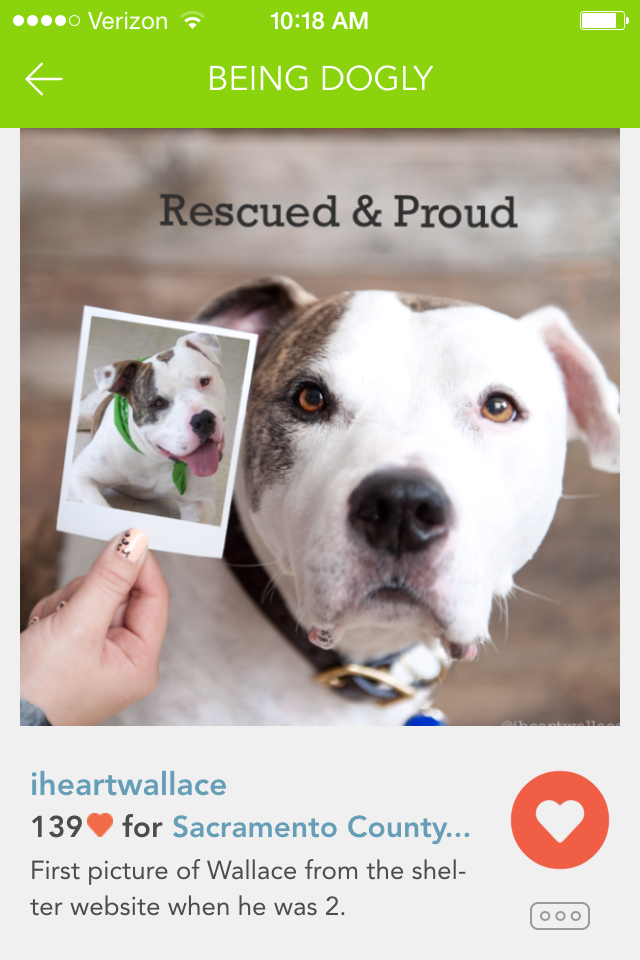 iheartwallace rescued.PNG