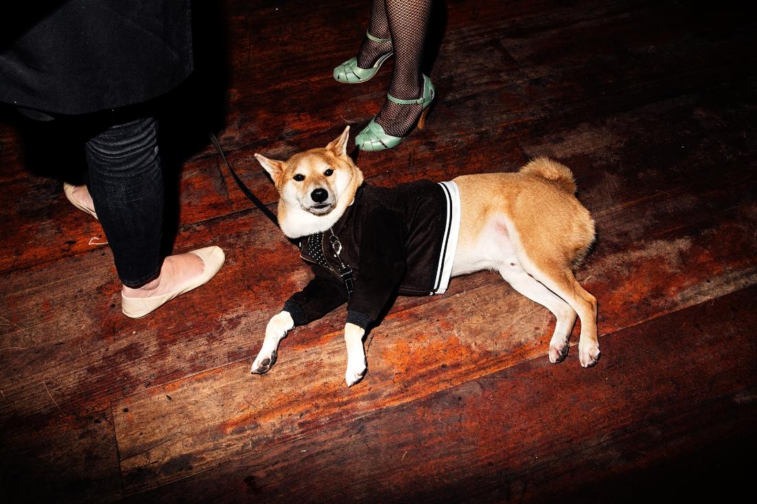 Menswear Dog