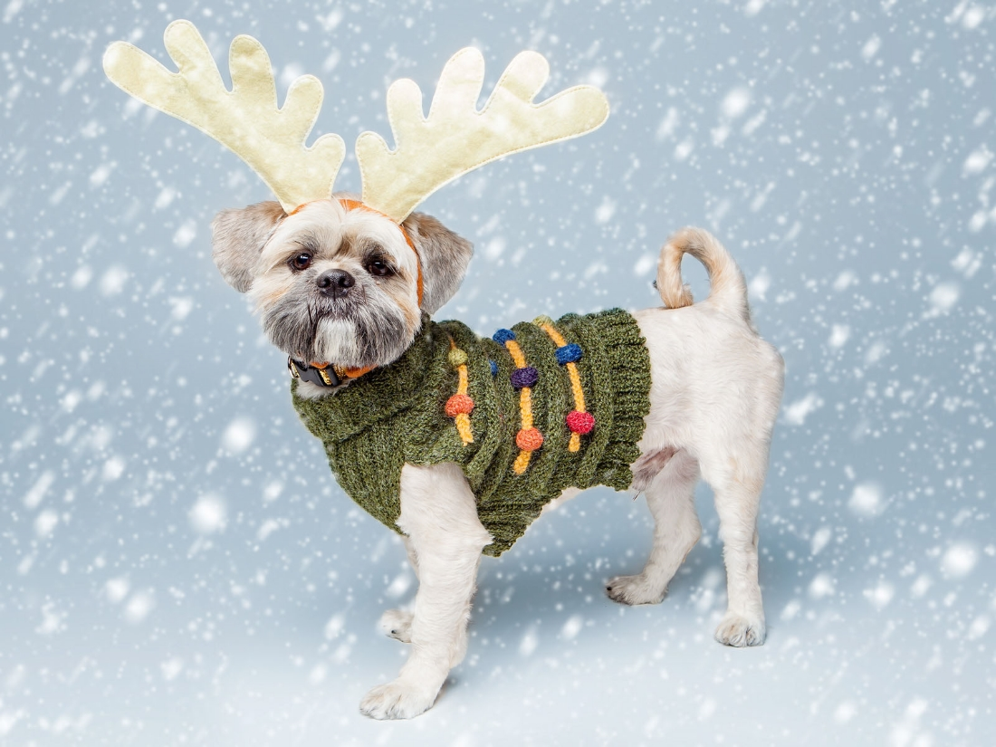 Barney  in a  DOG & CO. Tree Sweater