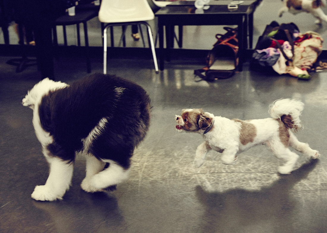 Hudson and Maya doing Grand Jete's