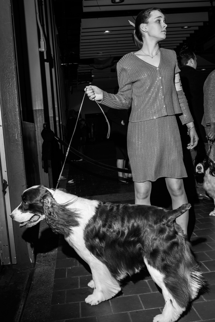 Connie Cox of Canton Michigan treats Jake, an English Springer Spaniel to a bit of fresh air before entering the rings of Pier 92 during the 140th Westminster Kennel Club dog show in New York City.
