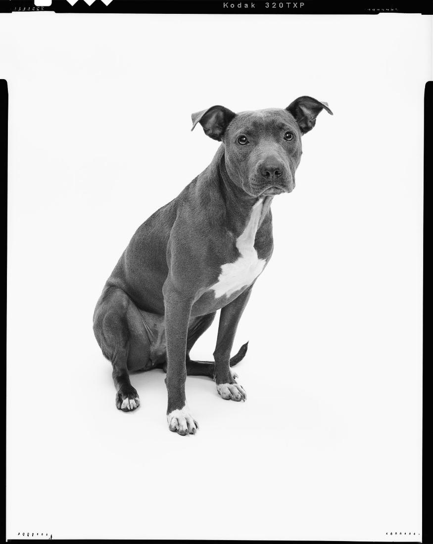 Jarren Vink rescue dog mrs sizzle.jpg