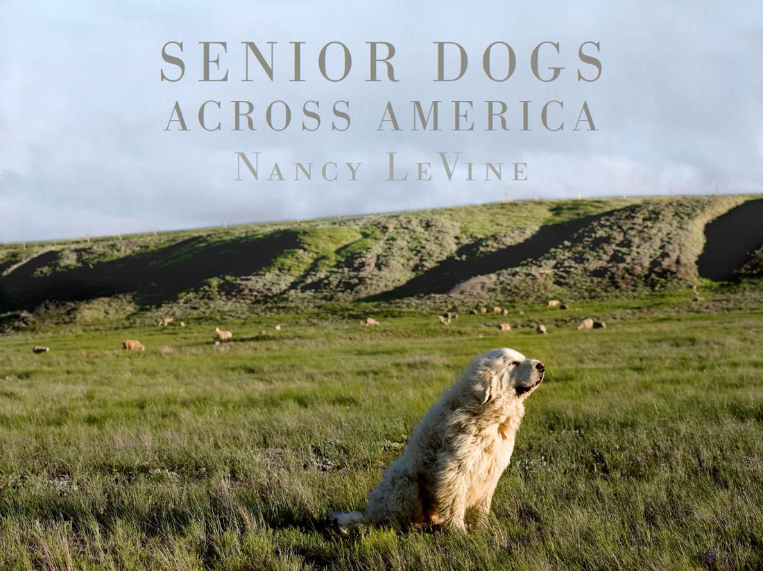 nancy levine senior dogs across america.jpg