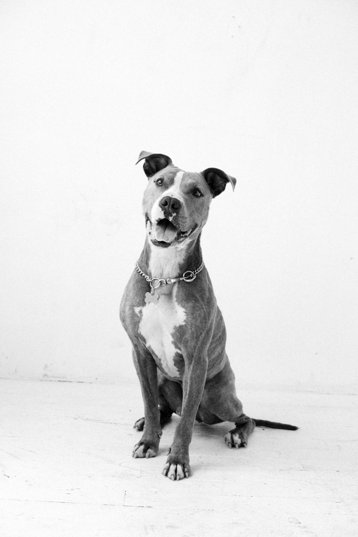 peter ash lee dog days mrs sizzle.jpg